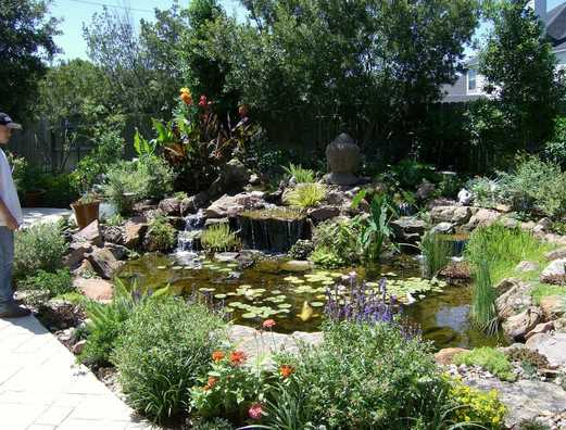 This Koi and Fish Pond Could be the Centerpiece of Your Yard in the Austin or Central Texas area