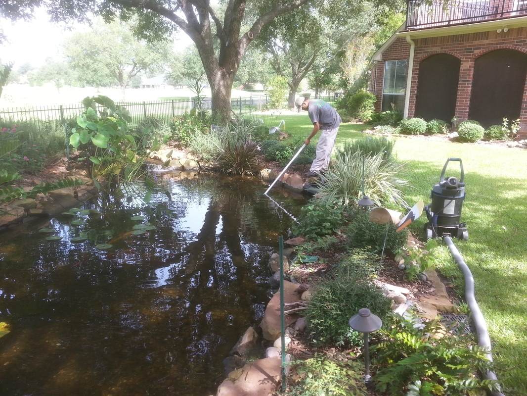 Backyard Pond Maintenance Services in Austin and the Central Texas area
