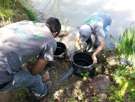 Pond Maintenance Services in Austin and Central Texas